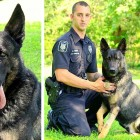 Police Department Refuses to Let Very Ill and Injured K-9 Retire
