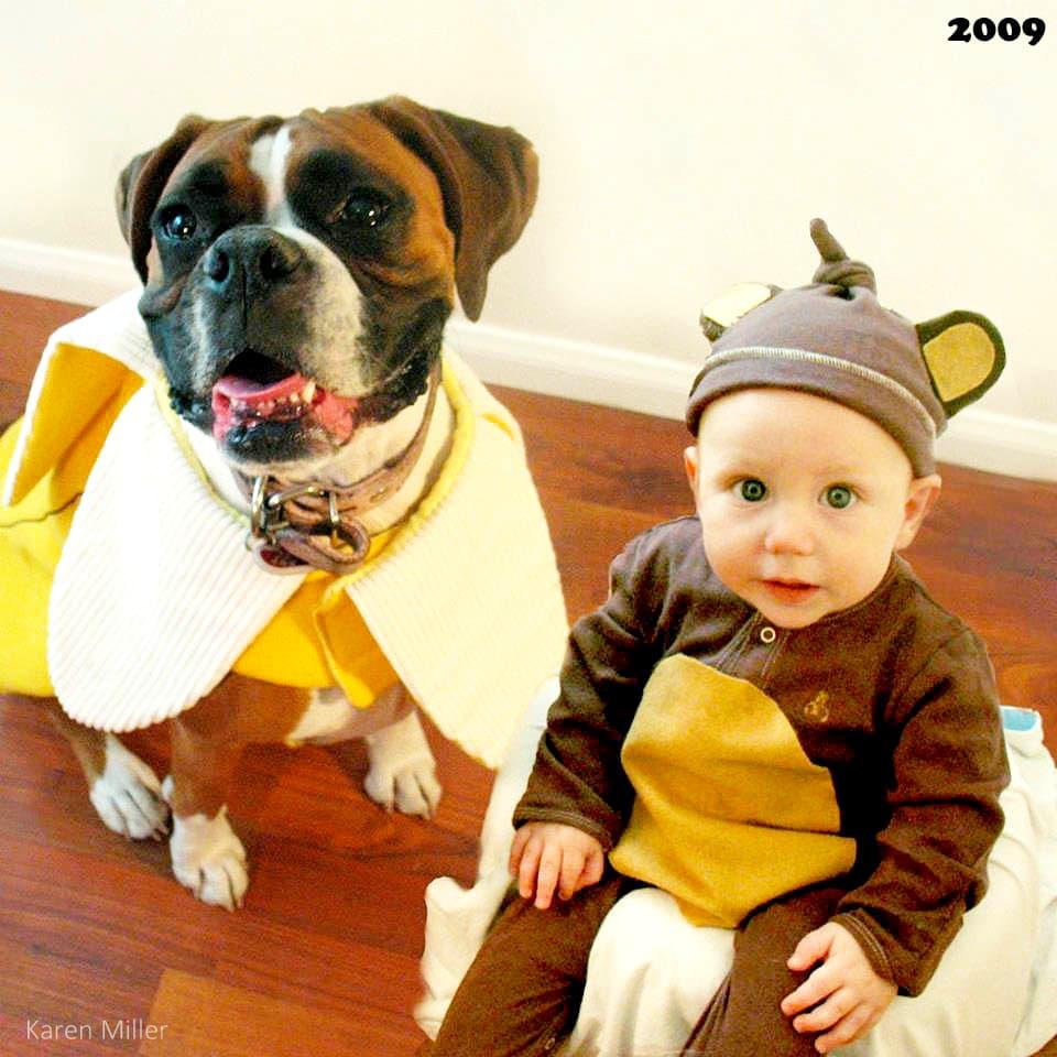 Boxer Halloween Costume For Dog
