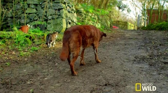 10.3.14 - Blind and Deaf Dog Has Guide Cat Best Friend3