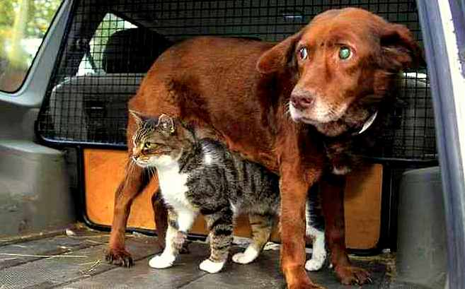 Blind and Deaf Dog Has Guide Cat Best Friend