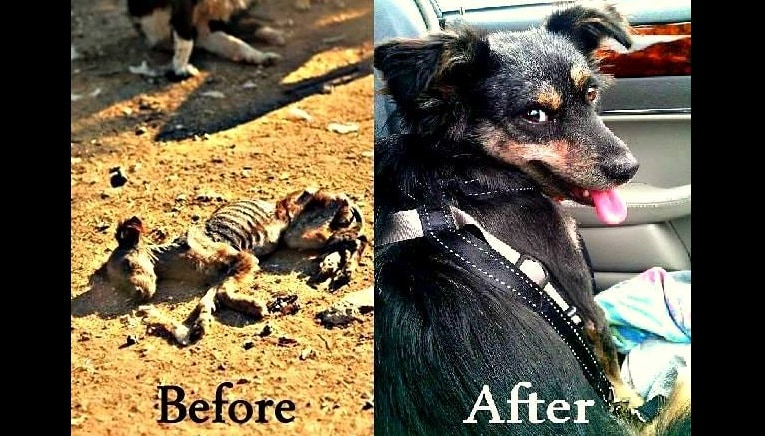 This Dog's Survival Is an Absolute MIRACLE