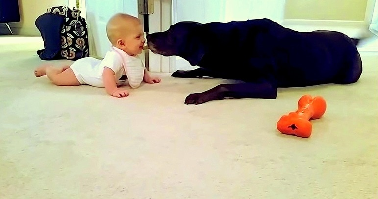 Baby's First Crawl Is to Her Dog