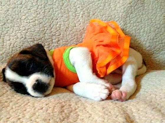 20 Puppies Who Love Halloween Life With Dogs