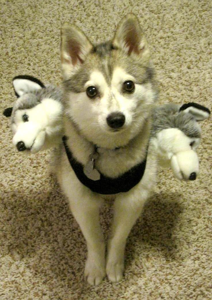 20 Puppies Who Love Halloween