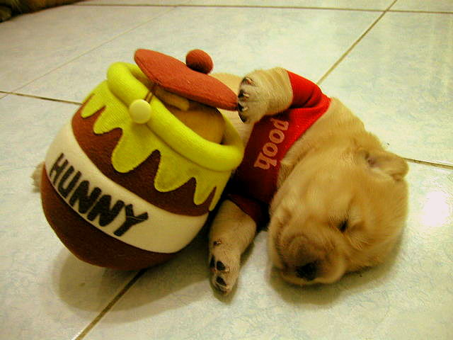 20 Puppies Who Love Halloween