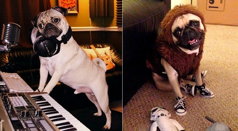 These Adorable Pugs Are Taking Over the Internet