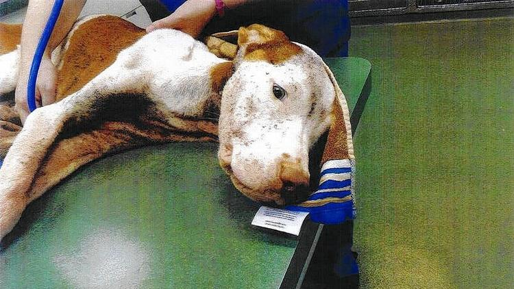 10.6.14 - Dog Rescued From Horrific Conditions In Florida1