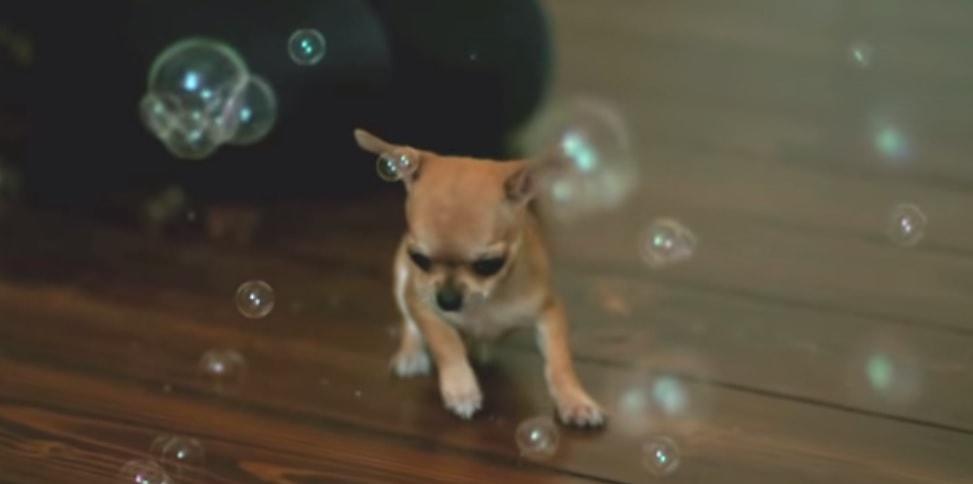 Audrey, Slayer of Bubbles