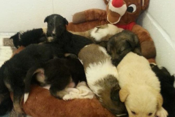 Twenty Puppies Rescued from Field in Saskatchewan