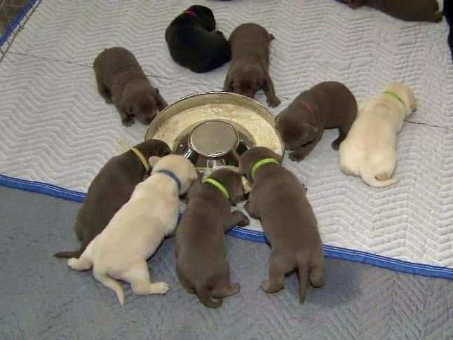 North Carolina Dog Has Record Setting Litter