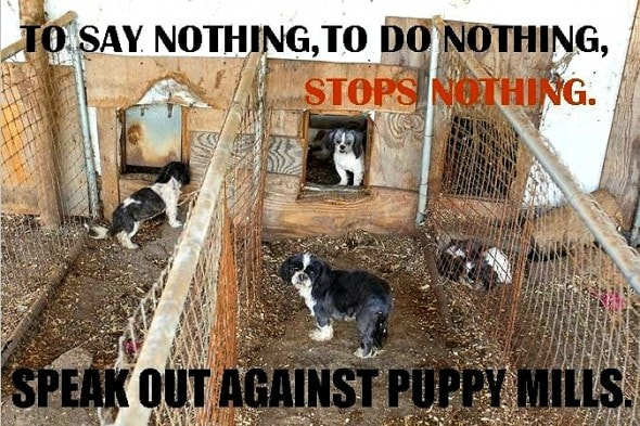 10.9.14 - USDA Helping Puppy Mill Breeders by Passing Laxer Laws1