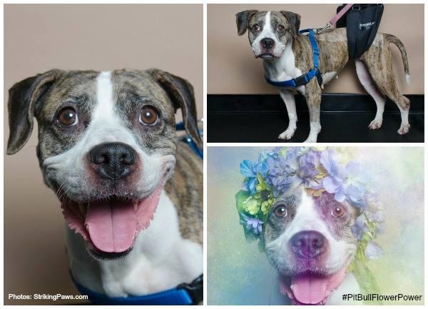 Lucy: Formerly Paralyzed Dog Walks Again