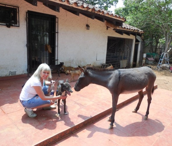 Nikko, Hale and the mule who thinks she's a dog. Photo Credit: Vanda Hale