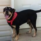 Dog Cheats Death Three Times
