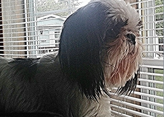 Indiana Family Devastated After Neighbor Sells Their Dog Online