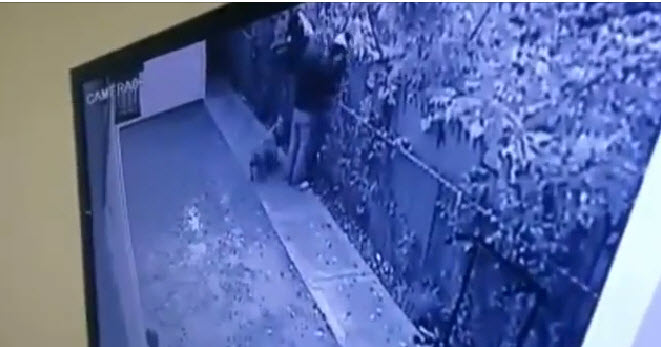 Video Captures Thieves Stealing Three Pets, Owners Want Their Dogs Back