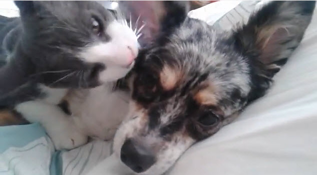 Dog and Cat Are True Best Friends