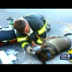 Firefighter Saved Dog's Life Using Human Oxygen Mask