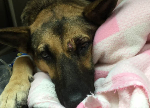 Three Animal Lovers and a Vet Save Hit-and-Run Dog