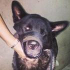 Dog Gets Shot Defending Owner in Armed Robbery