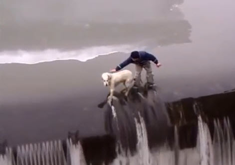 Video: 10 Most Inspiring Dog Rescues