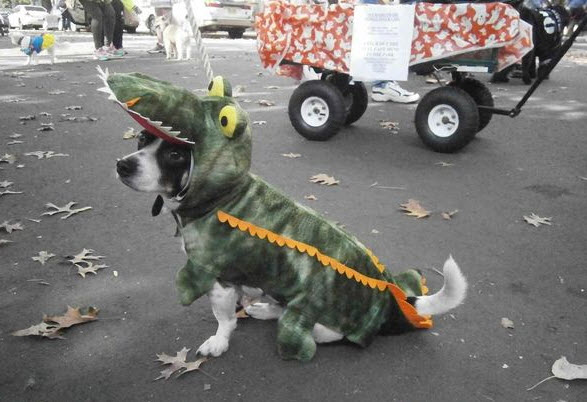 Photos: Is Your Dog Ready for Halloween?