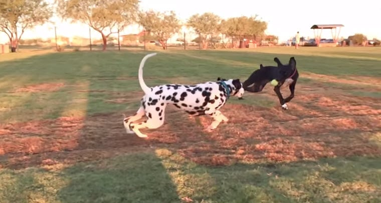 Dogs Running in Slow Motion