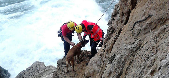 City Mayor Saves Dog Trapped on Rocky Cliff
