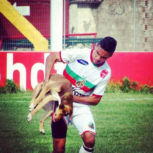 Stray Dog Interrupts Soccer Game, Bites Player, and Could Get a Forever Home