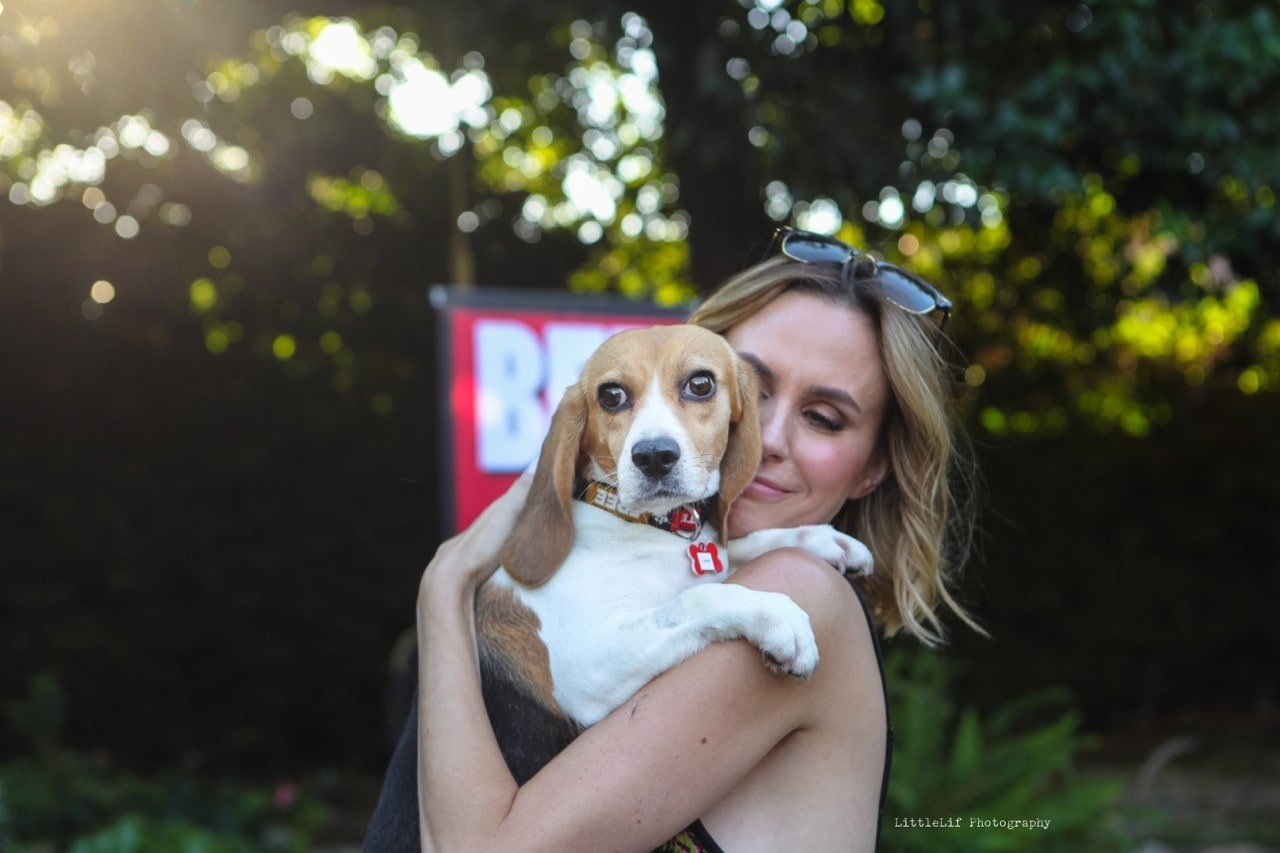 Rescue # 75 – Beagle Freedom Project