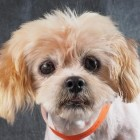 Puppy Mill Dog Delilah Experiences Pure Joy When She Tries Out a Soft Bed
