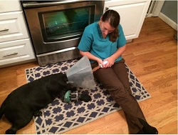 Lucy and her petmom, Jessica Cantone