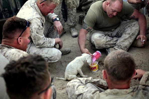 Soldiers and Their Best Friends