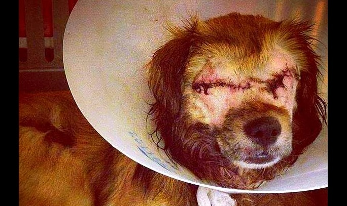 Heart of Gold Dog Miraculously Survives Two Murder Attempts