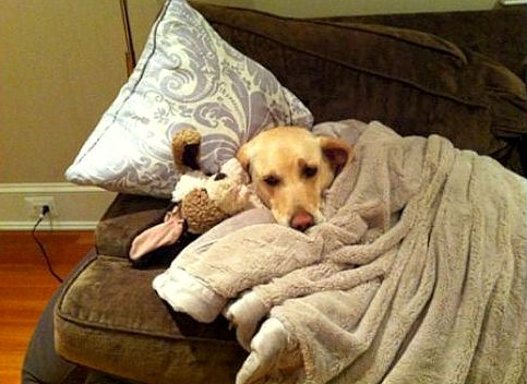 11.12.14 - Pets Who Just Can't Be Bothered to Get Out of Bed1