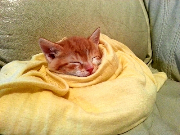 11.12.14 - Pets Who Just Can't Be Bothered to Get Out of Bed11