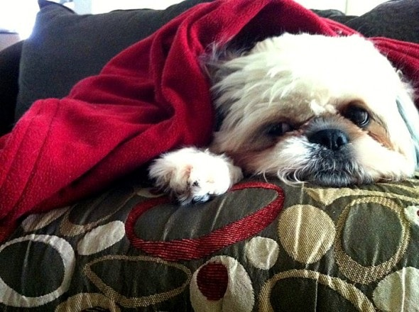 11.12.14 - Pets Who Just Can't Be Bothered to Get Out of Bed12