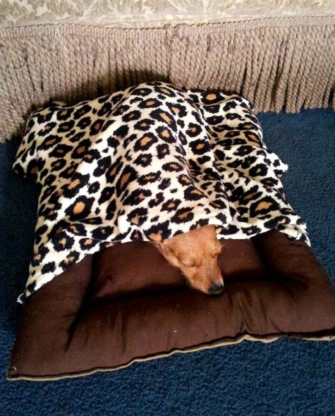 11.12.14 - Pets Who Just Can't Be Bothered to Get Out of Bed15