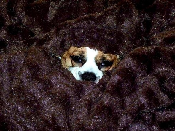 11.12.14 - Pets Who Just Can't Be Bothered to Get Out of Bed19