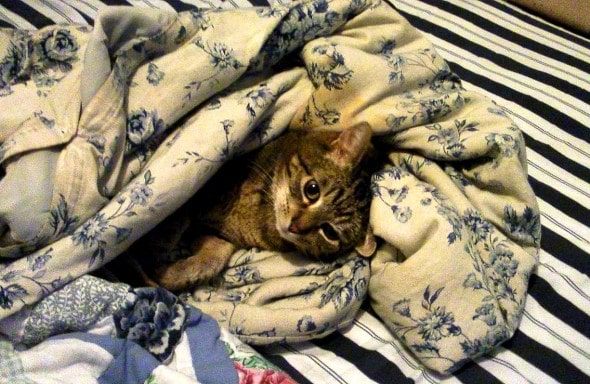 11.12.14 - Pets Who Just Can't Be Bothered to Get Out of Bed2