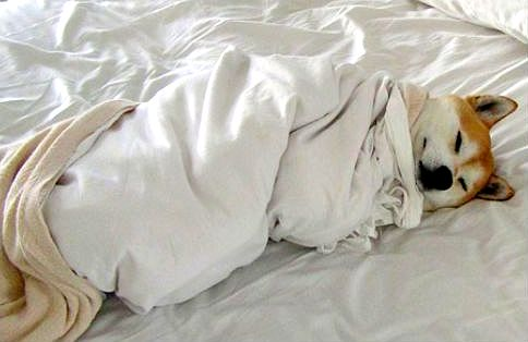 11.12.14 - Pets Who Just Can't Be Bothered to Get Out of Bed20