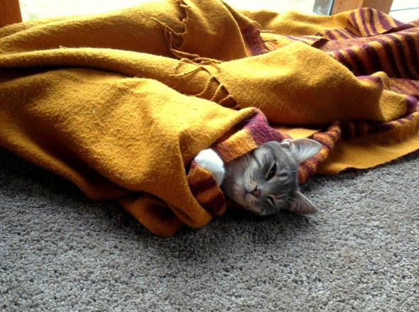 11.12.14 - Pets Who Just Can't Be Bothered to Get Out of Bed21