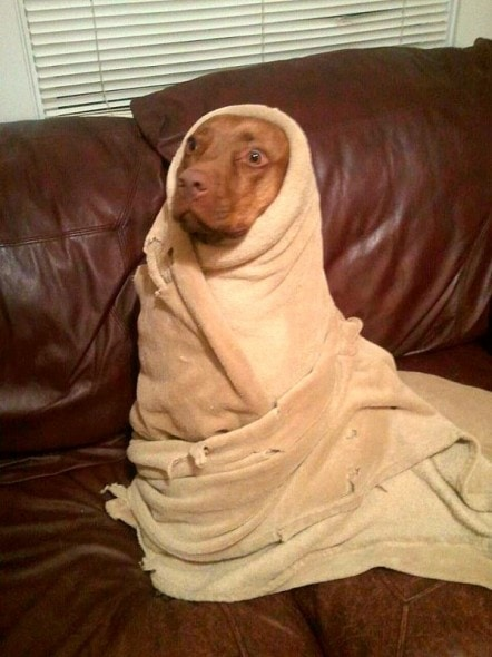11.12.14 - Pets Who Just Can't Be Bothered to Get Out of Bed24