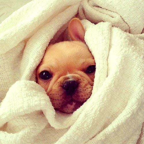 11.12.14 - Pets Who Just Can't Be Bothered to Get Out of Bed25