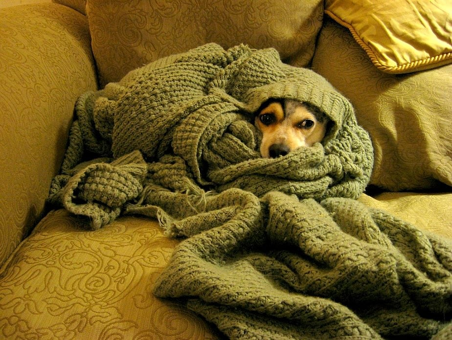 http://www.lifewithdogs.tv/wp-content/uploads/2014/11/11.12.14-Pets-Who-Just-Cant-Be-Bothered-to-Get-Out-of-Bed4.jpg