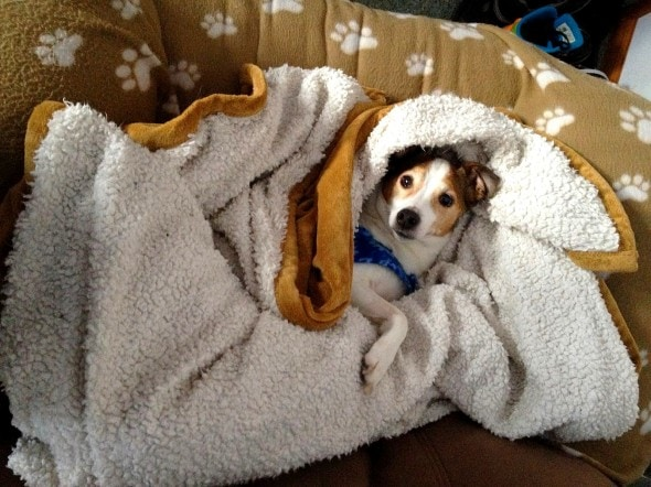11.12.14 - Pets Who Just Can't Be Bothered to Get Out of Bed5