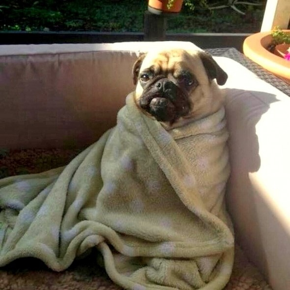 11.12.14 - Pets Who Just Can't Be Bothered to Get Out of Bed6