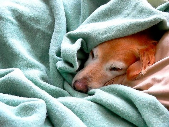 11.12.14 - Pets Who Just Can't Be Bothered to Get Out of Bed8
