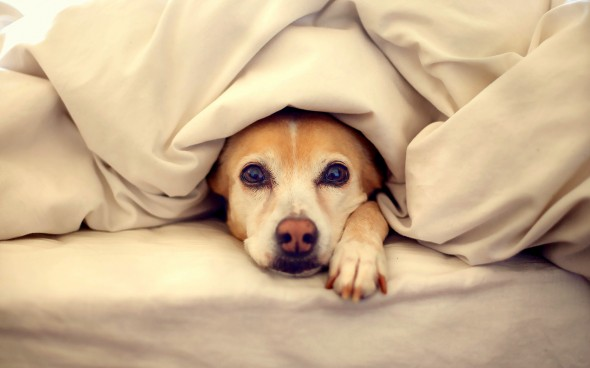 11.12.14 - Pets Who Just Can't Be Bothered to Get Out of Bed9