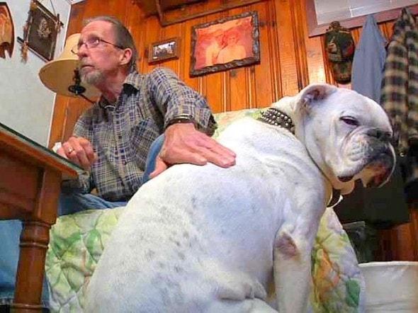 11.13.14 - Senior Dog Saves Vet's Life1